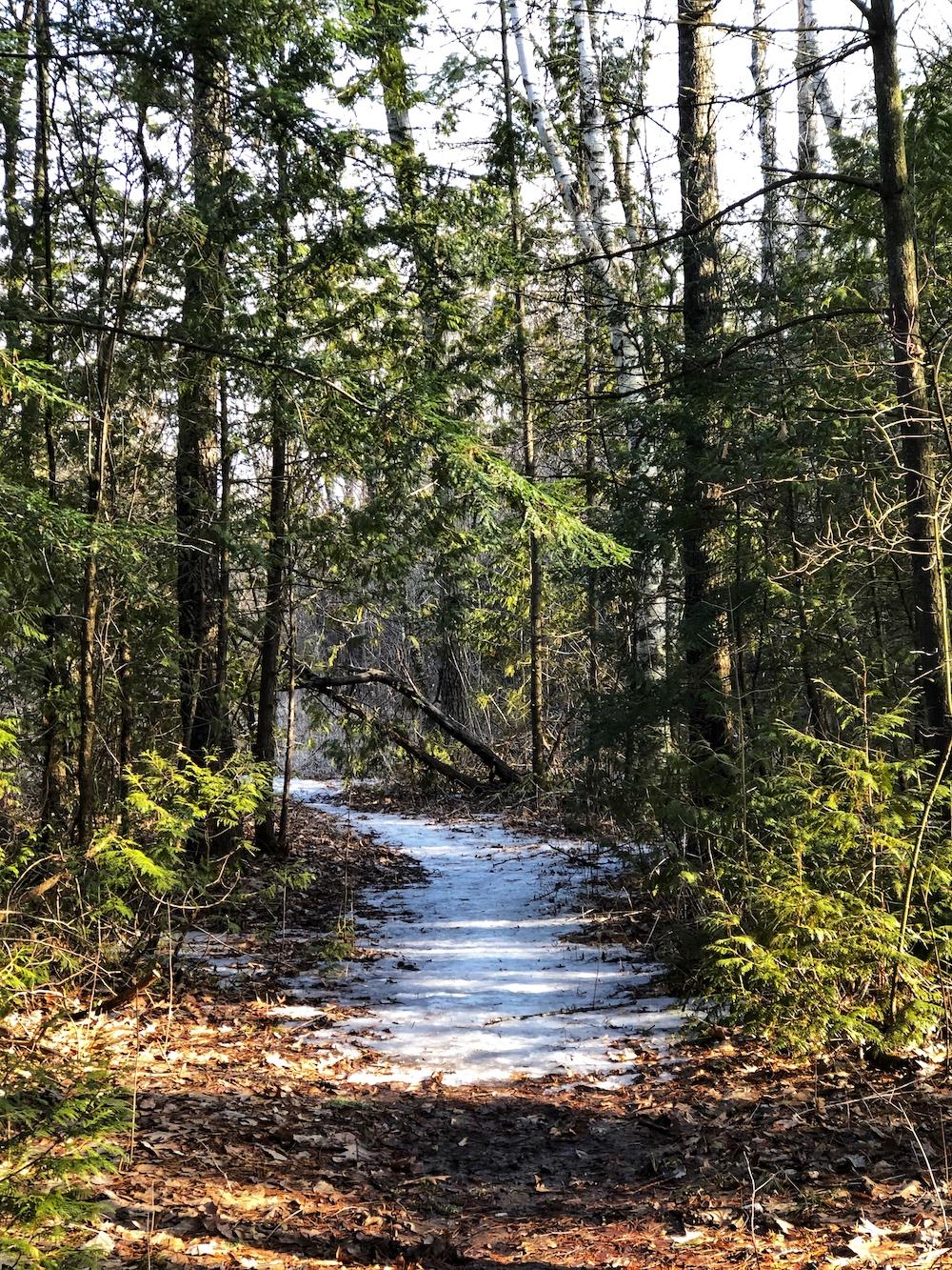 Ajax Conservation Area 3